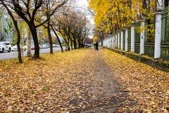 Hojas amarillas en un callejón de la ciudad imágenes de archivo libres de regalías