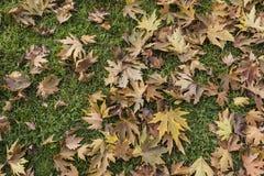 Hojas amarillas y de la naranja en la hierba fotos de archivo