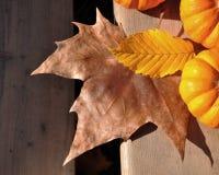 Hojas amarillas y marrones con las calabazas Fotografía de archivo libre de regalías