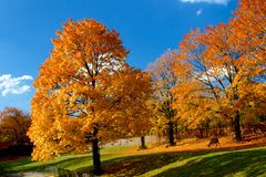 Hojas amarillas y rojas en árboles en el otoño, octubre fotos de archivo libres de regalías