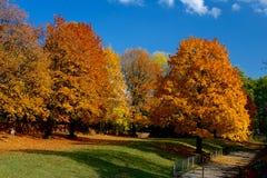 Hojas amarillas y rojas en árboles en el otoño, octubre foto de archivo libre de regalías