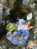 hojas amarillas y verdes del otoño en agua Foto de archivo libre de regalías