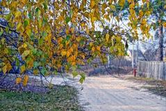 Hojas amarilleadas de los árboles de abedul cerca del camino Foto de archivo