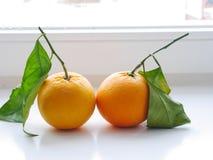 Hojas anaranjadas foto de archivo libre de regalías