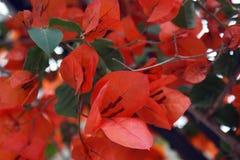Hojas anaranjadas fotos de archivo