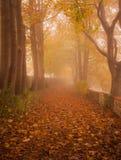 Hojas anaranjadas, bosque en niebla Foto de archivo libre de regalías