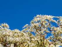Hojas blancas con un cielo azul Foto de archivo