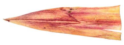 Hojas blancas del maíz presionadas aisladas en blanco Imagenes de archivo
