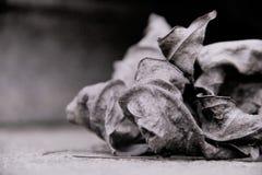 Hojas blancos y negros, hoja marchitada Fotografía de archivo libre de regalías