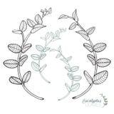 Hojas bosquejadas de la guirnalda del eucalipto fijadas ilustración del vector