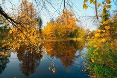 Hojas brillantes del abedul en la luz del sol en otoño Imagen de archivo