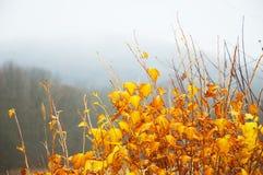 Hojas brillantes del amarillo Fotografía de archivo libre de regalías