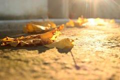 Hojas caidas Imagen de archivo libre de regalías