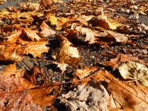 Hojas caidas Foto de archivo libre de regalías