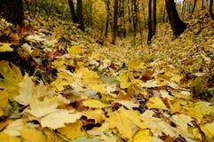 Hojas caidas amarillo en la tierra Imágenes de archivo libres de regalías