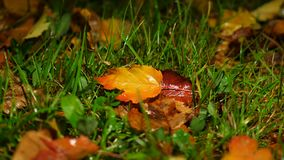 Hojas caidas brillantes en la tierra, mojado y lluvioso metrajes