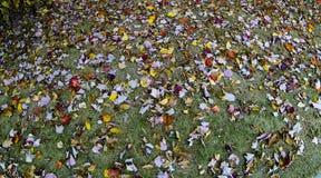 Hojas caidas coloridas en hierba verde Foto de archivo libre de regalías