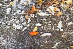 Hojas caidas congeladas en la superficie del cierre de la calle para arriba fotos de archivo libres de regalías
