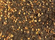 Hojas caidas de la naranja en el pavimento Fotografía de archivo