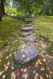 Hojas caidas del árbol de arce en los pasos de progresión de piedra y el musgo Foto de archivo libre de regalías