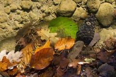 Hojas caidas en agua de río transparente Imagen de archivo