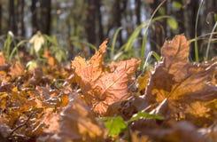 Hojas caidas en bosque del otoño Imagenes de archivo