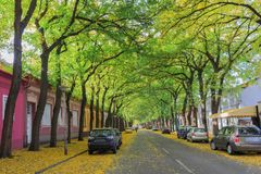 Hojas caidas en el otoño temprano en la calle Fotografía de archivo libre de regalías