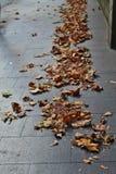 Hojas caidas en el pavimento foto de archivo libre de regalías