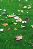 Hojas caidas en hierba Fotos de archivo