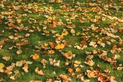Hojas caidas en hierba Foto de archivo libre de regalías