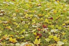 Hojas caidas en hierba Imagen de archivo libre de regalías