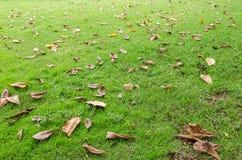 Hojas caidas en la hierba Fotografía de archivo