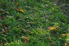 Hojas caidas en la hierba verde Fotografía de archivo