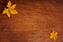 Hojas caidas en la madera Imágenes de archivo libres de regalías