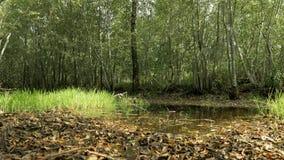 Hojas caidas en la tierra D3ia del otoño Tiro liso del carro almacen de metraje de vídeo