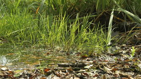 Hojas caidas en la tierra en un tiro del resbalador del pantano metrajes