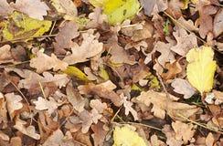 Hojas caidas en otoño Fotos de archivo libres de regalías