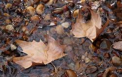 Hojas caidas en una corriente pura. Foto de archivo
