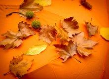 Hojas caidas - follaje en el paraguas anaranjado Fotografía de archivo
