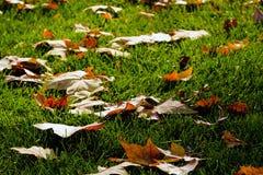 Hojas caidas, hierba verde Imágenes de archivo libres de regalías