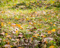 Hojas caidas otoño Foto de archivo