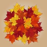 Hojas caidas otoño del vector Fotografía de archivo