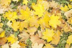 Hojas caidas otoño en la hierba Imagenes de archivo
