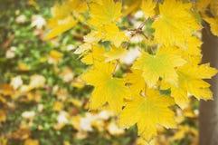 Hojas caidas otoño en la hierba Foto de archivo