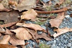 Hojas caidas otoño seco foto de archivo
