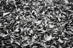 Hojas caidas que ponen en la tierra Imágenes de archivo libres de regalías