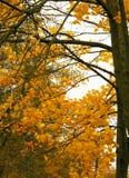 Hojas caidas, un árbol con las hojas amarillas, un otoño lluvioso, una hoja mojada Imagenes de archivo