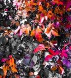 Hojas coloreadas Foto de archivo libre de regalías