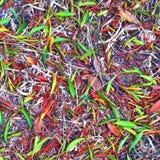 Hojas coloreadas Imagenes de archivo