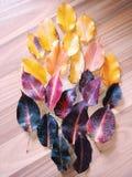 Hojas coloreadas Imagen de archivo libre de regalías